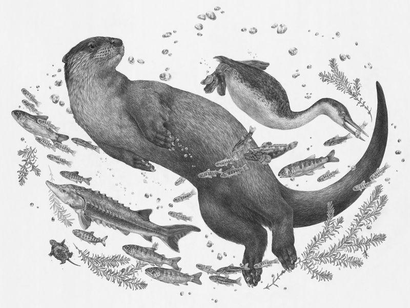 zoekellerart ilustración nutria